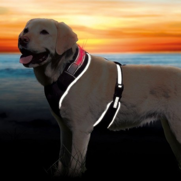 Świecące szelki dla psa