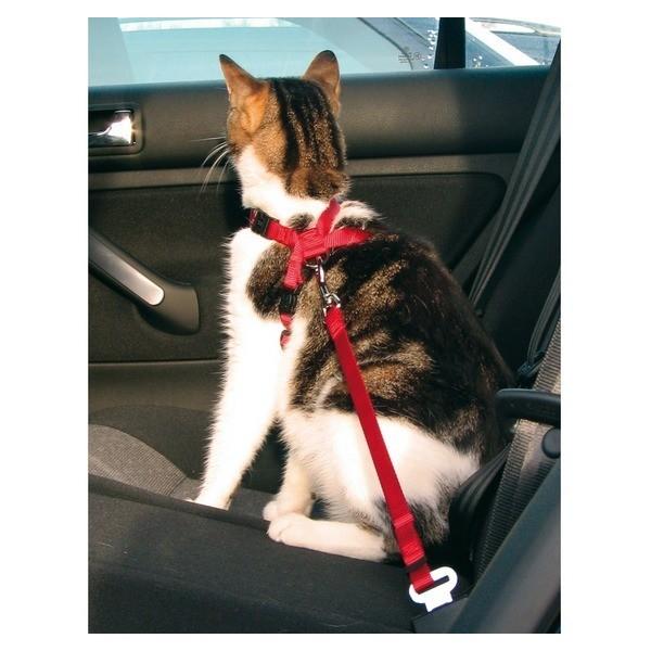 Samochodowe szelki bezpieczeństwa dla kota